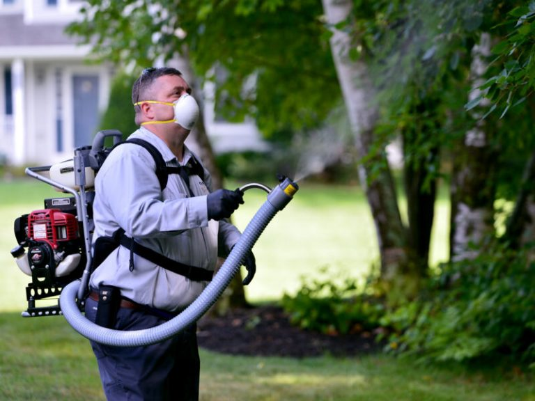 Pest Control Alexandra Hills
